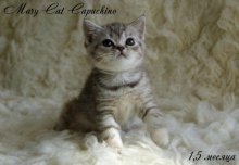 MaryCat-Capuchino-3.jpg
