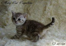 MaryCat-Capuchino-4.jpg