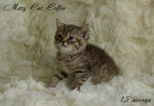 MaryCat-Coffee.jpg