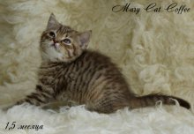 MaryCat-Coffee-4.jpg