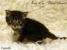 MaryCat-Friend-Saturn-10-09-2014-01.jpg