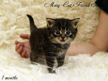MaryCat-Friend-Saturn-10-09-2014-03.jpg