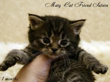 MaryCat-Friend-Saturn-10-09-2014-04.jpg