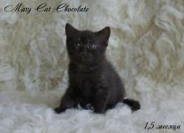 Mary Cat Chocolate