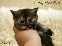 Florita Mary Cat